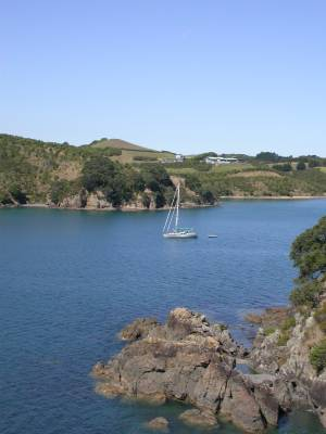 Shear Madness at anchor at Waiheke Island