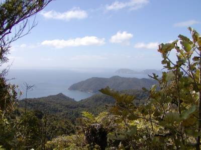 View from Mt. Hobson on Great Barrier Island