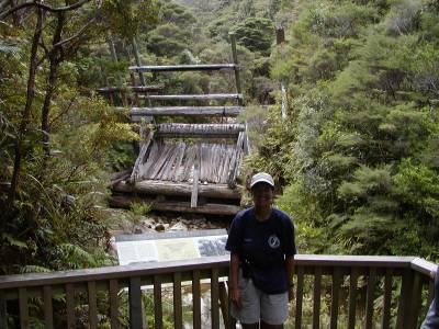 Kathy at the Kauri Dam on Great Barrier Island