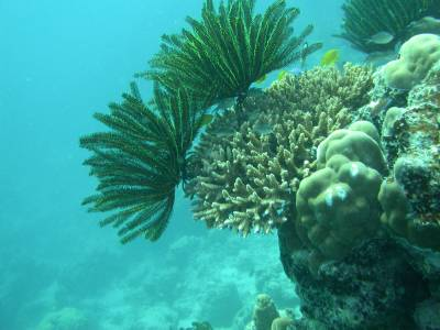 The reef at Amadee - the new camera works!