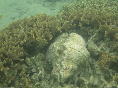 A giant clam relaxes in his sanctuary